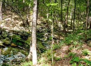 Irons Creek Cascades, a five-step waterfall.